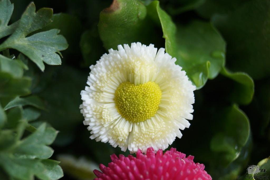 Herzliche Blume