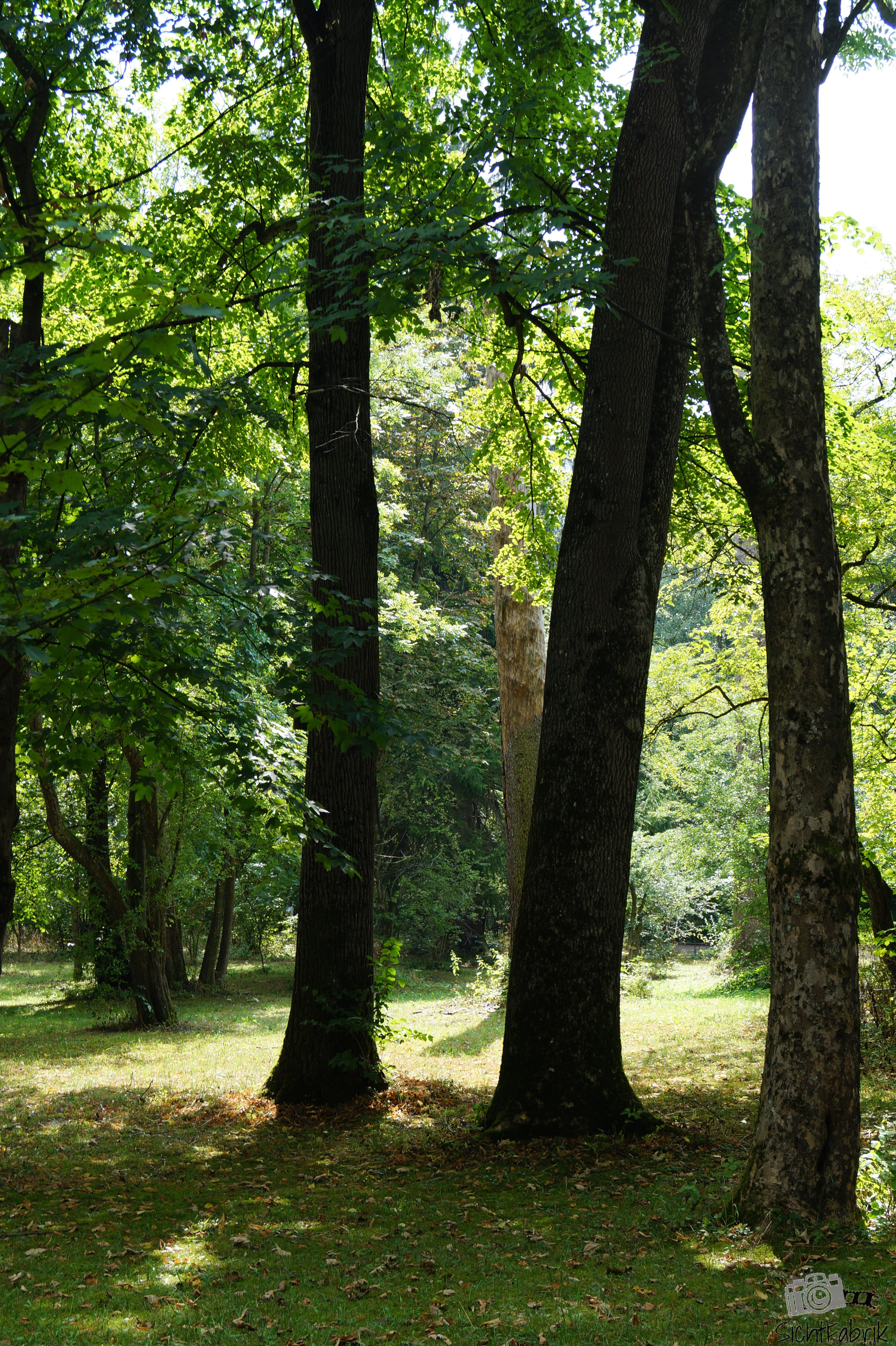 Bäume und Wald
