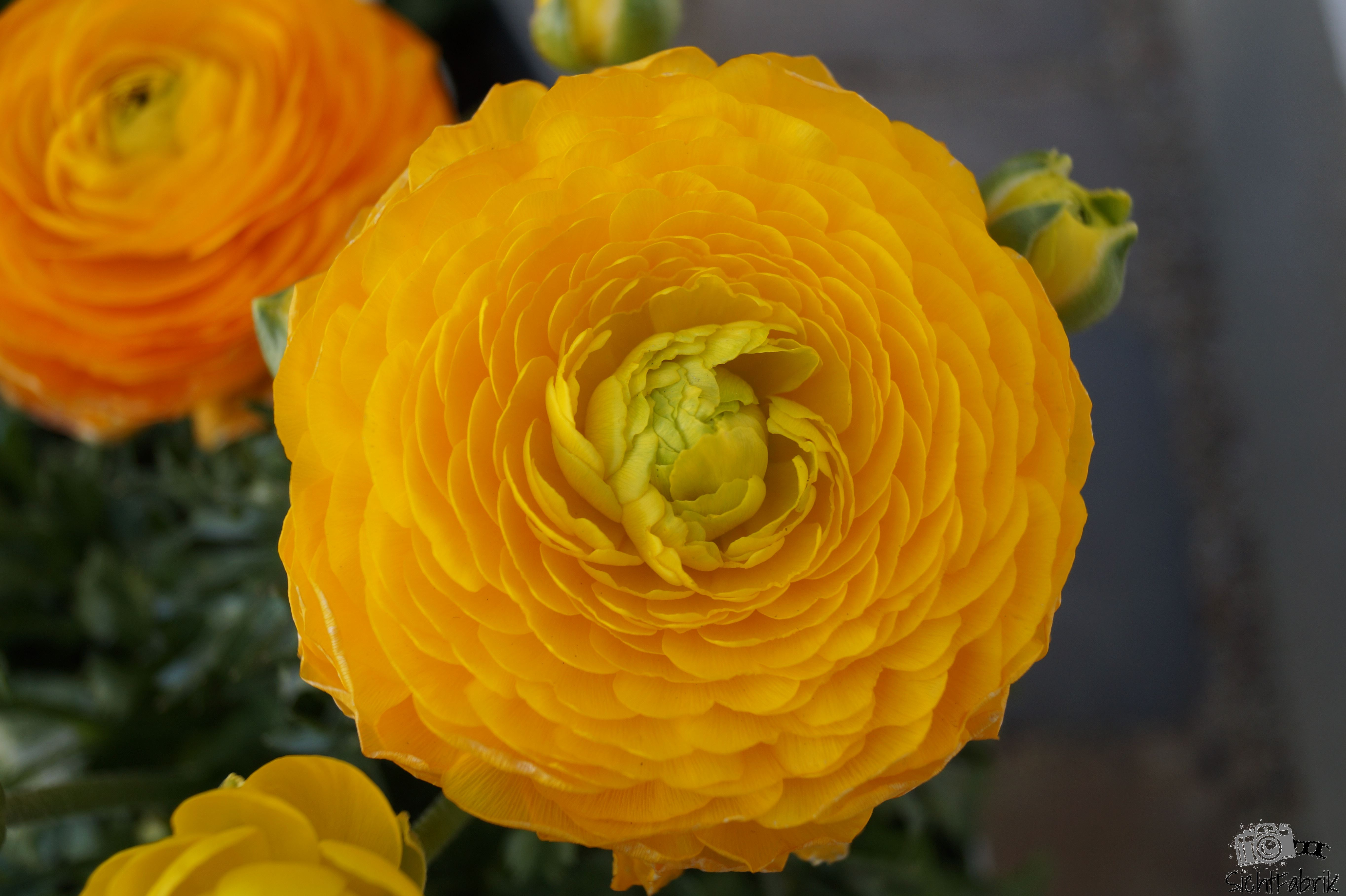 Geliebte Blumen